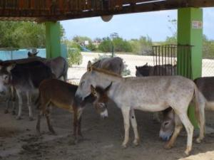 Donkey sanctuary ICU
