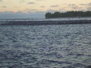 birds fishing off rangiroa pass