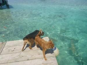 dogs barking at sharks