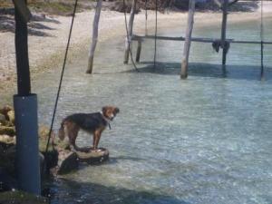 shark scaring dog!