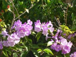 Beautiful local flowers
