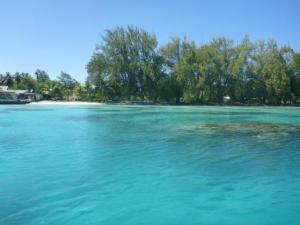 Fakarava coral near anchorage
