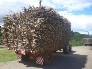 sugar cane en route